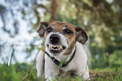 威嚇する犬の顔のアップ
