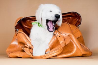 オレンジのバッグに入る犬