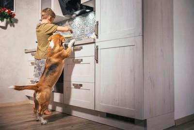 キッチンにいる男の子と犬