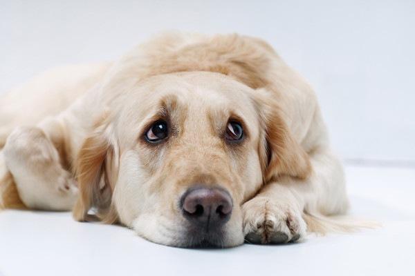 悲しそうな犬の顔