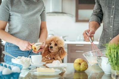 食事の準備をする飼い主さんを見つめる犬