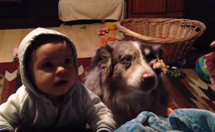 ごはんをみつめる赤ちゃんと犬