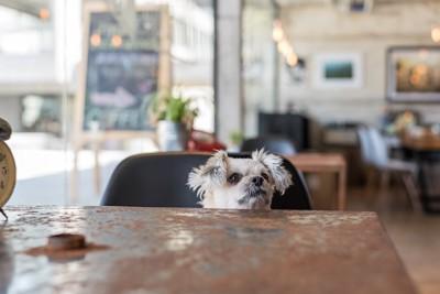 椅子に座って顔を出す垂れ耳の犬