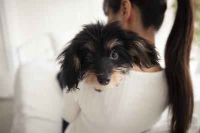 髪の長い女性に抱っこされた長毛の犬