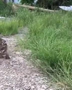 逃げるカモ