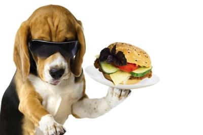 ハンバーガーを持っている犬