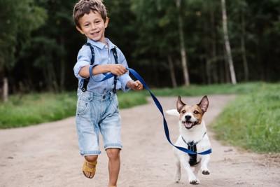 走るジャックラッセルテリアのリードを持つ男の子