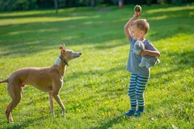 ボールを投げようとする男の子と見る犬
