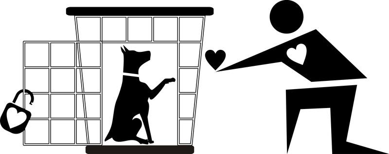 保健所から犬を迎えるための心構えイメージ