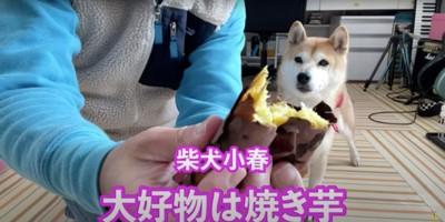 焼き芋が大好き