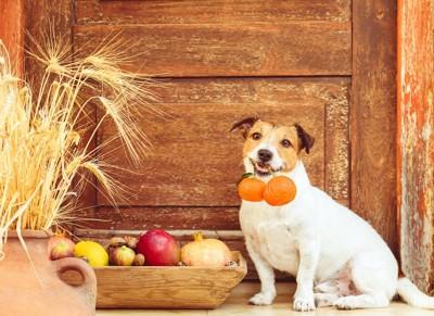 オレンジを咥える犬と箱に入ったフルーツ