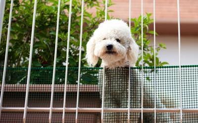 上からのぞいている犬の写真