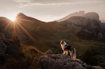 大自然と犬