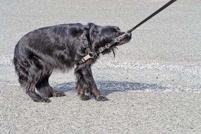 怯える黒い犬