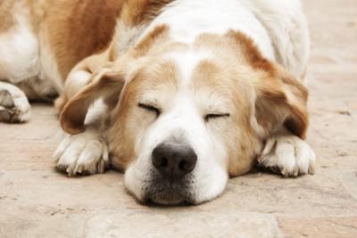 目をつぶっている犬
