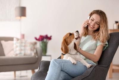 電話する女性と膝の上に乗る犬