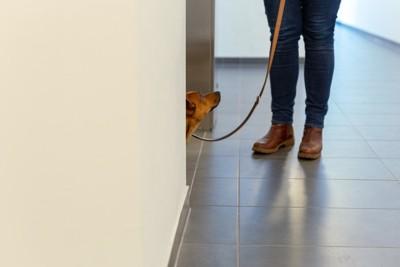 マンション内で散歩させる人と犬