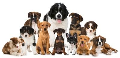 さまざまな犬種が並ぶ写真