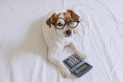 メガネをかけた犬と電卓