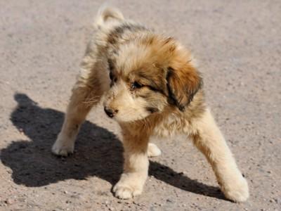 雑種の茶色の子犬