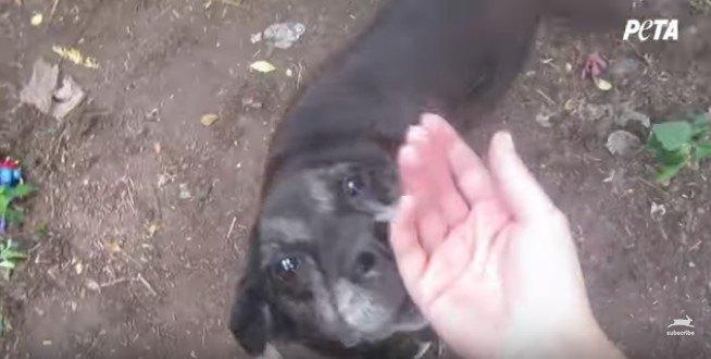 人の手に顔を寄せる犬