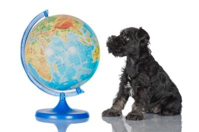 地球儀を見つめる犬