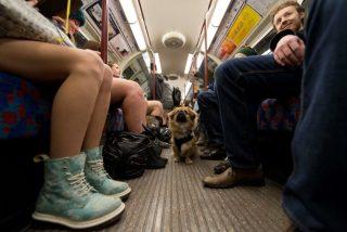 犬がいる電車の様子