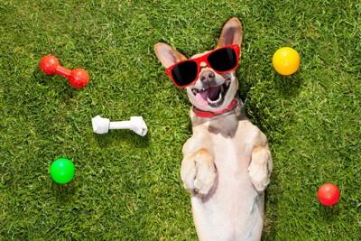 サングラスかけて笑う犬