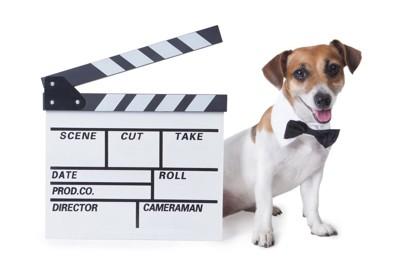 映画のカチンコと犬