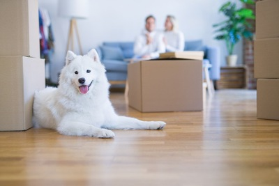 ダンボールの部屋と犬