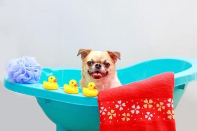 おもちゃとお風呂と犬