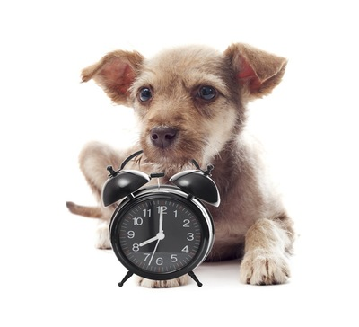 時計と子犬 67836312
