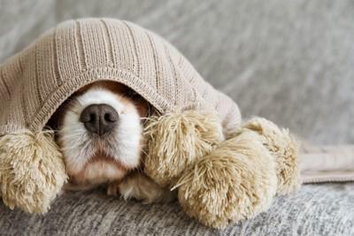 毛布にくるまって鼻を出す犬