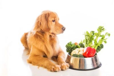 多くの野菜を前にする犬
