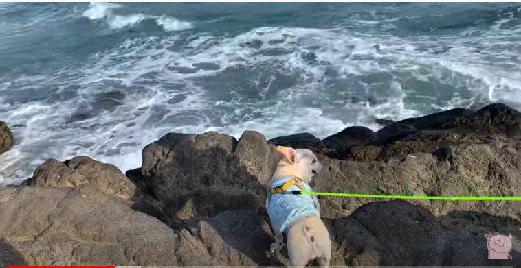 海がすごい
