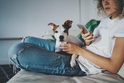 携帯を見る女性の膝に乗る犬