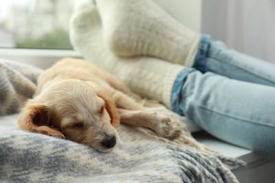 飼い主さんの足元で眠る犬