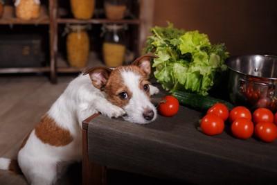 トマトと犬