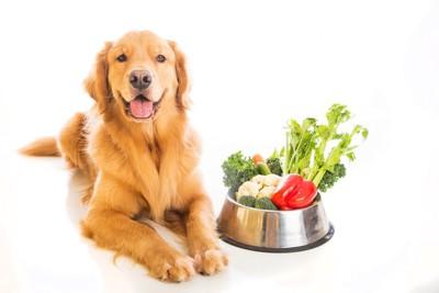餌皿に載っている野菜にご満悦の犬