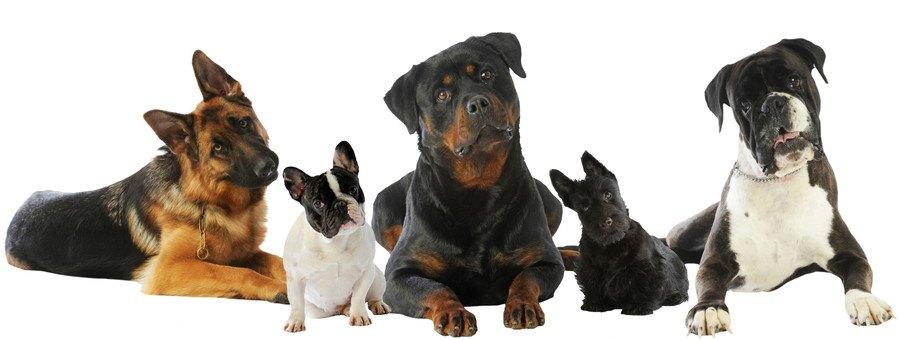 いろいろな犬種の犬