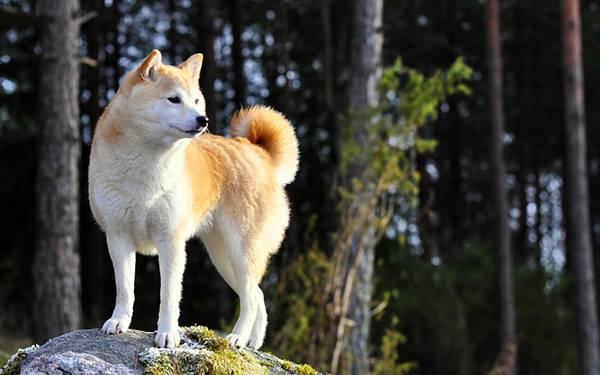 岩と柴犬の写真