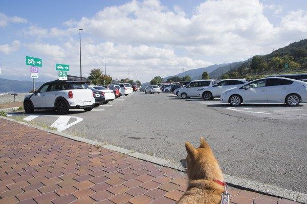 駐車場にいる犬の後ろ姿