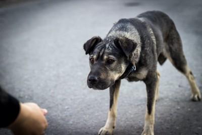 差し出された人の手に怯える犬