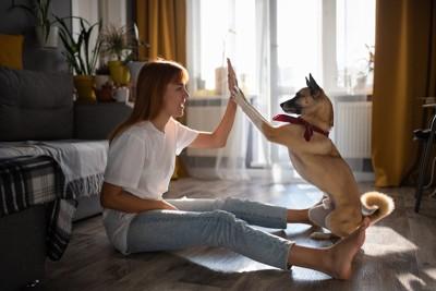 飼い主さんに両手でタッチする犬