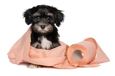 ピンクのトイレットペーパーで巻かれている子犬