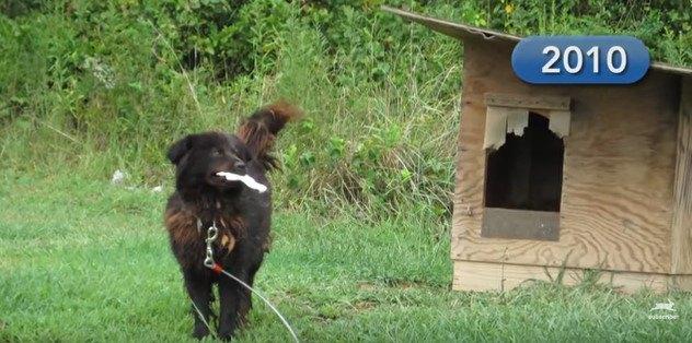 設置した犬小屋