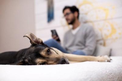 携帯をいじる飼い主とベッドに寝そべる犬