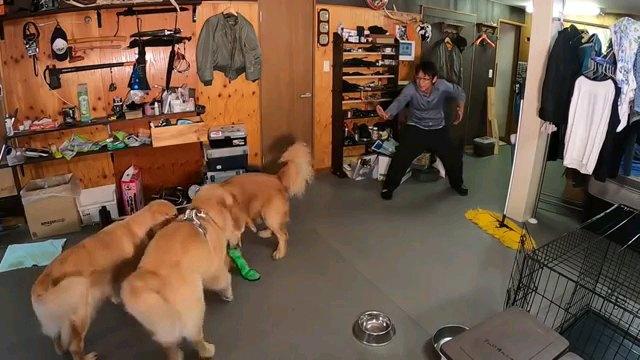 犬達に手をかざす人