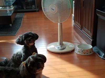 扇風機と犬2匹