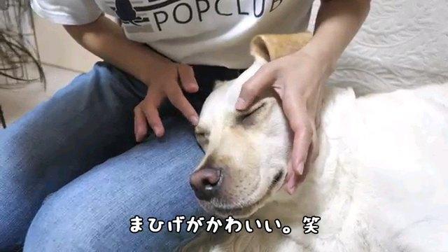 まひげ~字幕